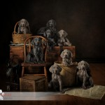 Business of Pet Photography